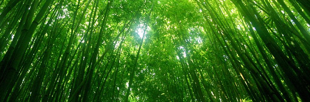 Keeping Bamboo Strong