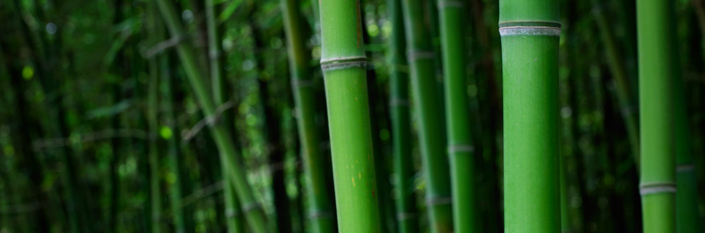 World Bamboo Needs Your Support!